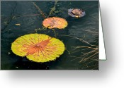Lilies Sculpture Greeting Cards - Lily Pads Greeting Card by Brenda Alcorn