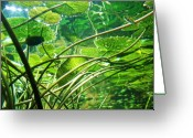 Anna Villarreal Garbis Greeting Cards - Lily Pads I Greeting Card by Anna Villarreal Garbis