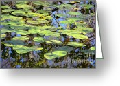 Florida Swamp Greeting Cards - Lily Pads in the Swamp Greeting Card by Carol Groenen
