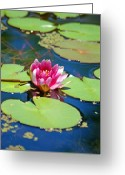 Lilies Tapestries - Textiles Greeting Cards - Lily Pond Greeting Card by Donna Bentley
