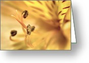 Filament Greeting Cards - Lily Greeting Card by Scott Norris