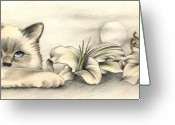 Flowers Pastels Greeting Cards - Lily the Birman Greeting Card by Johanna Pieterman