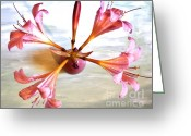 Poster From Greeting Cards - Lily Twirl Greeting Card by Marsha Heiken