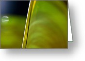 Green Print Glass Art Greeting Cards - Lime Abstract Greeting Card by Dana Kern