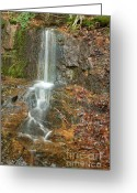 Grafton County Greeting Cards - Lincoln Woods - White Mountains New Hampshire USA Greeting Card by Erin Paul Donovan