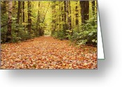 Ecosystem Greeting Cards - Lincoln Woods Trail  - White Mountains New Hampshire Greeting Card by Erin Paul Donovan
