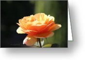 Single Rose Greeting Cards - Lindas Rose Garden 3 Greeting Card by Kerri Ligatich