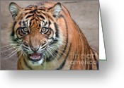 Hunter Photo Greeting Cards - Line Of Sight Greeting Card by Dan Holm