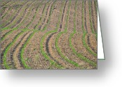 Cornfield Greeting Cards - Lines Greeting Card by Emily Stauring