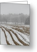 Cornfield Photo Greeting Cards - Lines In The Snow Greeting Card by Odd Jeppesen