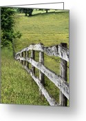 Barbed Wire Fences Photo Greeting Cards - Lines Greeting Card by JC Findley
