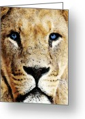 Sports Art Greeting Cards - Lion Art - Blue Eyed King Greeting Card by Sharon Cummings