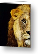 Sports Art Greeting Cards - Lion Art - Face Off Greeting Card by Sharon Cummings