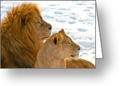 Whiskers Greeting Cards - Lion couple in the snow Greeting Card by Gert Lavsen