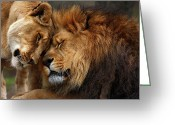 Big Cats Greeting Cards - Lions in Love Greeting Card by Emmanuel Panagiotakis
