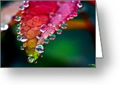 Christopher Holmes Photography Greeting Cards - Liquid Beads Greeting Card by Christopher Holmes