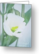 Decorativ Photo Greeting Cards - Lisianthus Greeting Card by Angela Doelling AD DESIGN Photo and PhotoArt