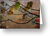 Feeding Greeting Cards - Little Bird Greeting Card by Todd Hostetter