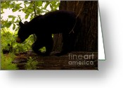 Prowling Greeting Cards - Little Black Bear Greeting Card by David Lee Thompson