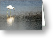 Morph Greeting Cards - Little Blue Heron MX-2 Greeting Card by Diana Douglass