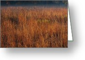Prairie Native Greeting Cards - Little Bluestem Grasses On The Prairie Greeting Card by Steve Gadomski