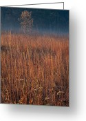 Prairie Native Greeting Cards - Little Bluestem Prairie Grass Greeting Card by Steve Gadomski