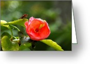 Impatiens Flowers Greeting Cards - Little Bug And The Impatien Greeting Card by Tracie Kaska