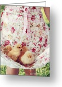 Buff Greeting Cards - Little Chicks Greeting Card by Stephanie Frey