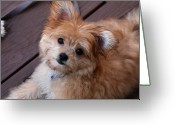 Purebreed Greeting Cards - Little Darling Greeting Card by Angie McKenzie
