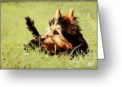 Pet Picture Greeting Cards - Little dog Greeting Card by Angela Doelling AD DESIGN Photo and PhotoArt