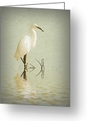 Aged Digital Art Greeting Cards - Little Egret Greeting Card by Sharon Lisa Clarke