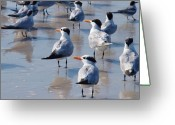 Tern Greeting Cards - Little Flock  Greeting Card by E Luiza Picciano