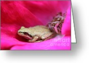 Brown Frog Greeting Cards - Little Frog in a Red Rose Flower Greeting Card by Jennie Marie Schell