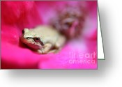 Brown Frog Greeting Cards - Little Frog in Red Rose Flower II Greeting Card by Jennie Marie Schell