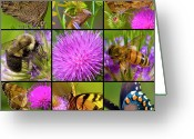 Honey Bee Greeting Cards - Little Guys  Greeting Card by East Coast Barrier Islands Betsy A Cutler