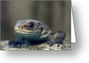 Animal Head Greeting Cards - Little Lizard Climbing Over Wall, York Greeting Card by BlackCatPhotos
