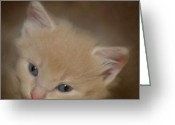 Kitten Greeting Card Greeting Cards - Little One Greeting Card by Steven Richardson
