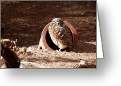Burrowing Owl Greeting Cards - Little Owl 2 Greeting Card by Methune Hively