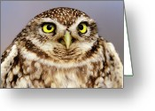 Owl Photography Greeting Cards - Little Owl Athene Noctua Portrait Greeting Card by Niels Kooyman
