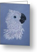 Umbrella Cockatoo Greeting Cards - Little PJ Greeting Card by Laurilee Taylor