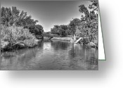  Biltmore Hotel Greeting Cards - Little river Greeting Card by Armando Perez