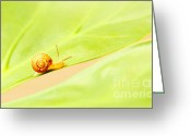 Slime Greeting Cards - Little snail Greeting Card by Anna Omelchenko