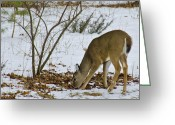 Rudolph Greeting Cards - Little White tail Greeting Card by LeeAnn McLaneGoetz McLaneGoetzStudioLLCcom