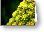 Clump Greeting Cards - Little Yellow Flowers Greeting Card by Shane Rees