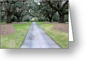 Live Art Greeting Cards - Live Oak Alee Greeting Card by Suzanne Gaff