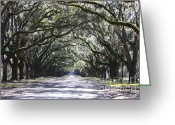 Country Lanes Photo Greeting Cards - Live Oak Lane in Savannah Greeting Card by Carol Groenen