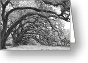 Live Oak Trees Greeting Cards - Live Oak Trees Charleston South Carolina Greeting Card by Dustin K Ryan