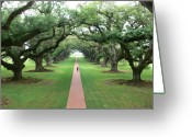 Longevity Greeting Cards - Live Oaks Greeting Card by Francine Gourguechon