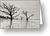 Live Oak Trees Greeting Cards - Live Oaks of Botany Bay Beach SC Greeting Card by Dustin K Ryan