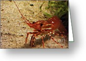 Live Art Greeting Cards - Live Shrimp Greeting Card by Methune Hively